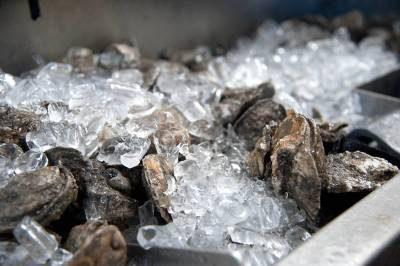 Oyster Festival, Saturday and Sunday at Riverfront